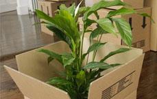 Μεταφορά Κατοικίδιων και φυτών